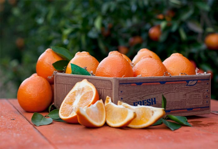 Honeybell Oranges